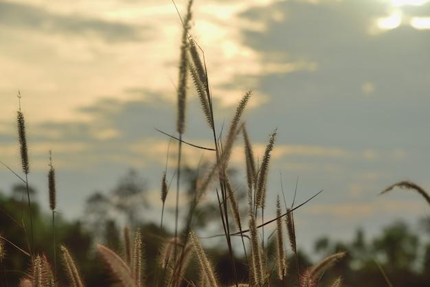 Erba di fiori in natura sullo sfondo del sole
