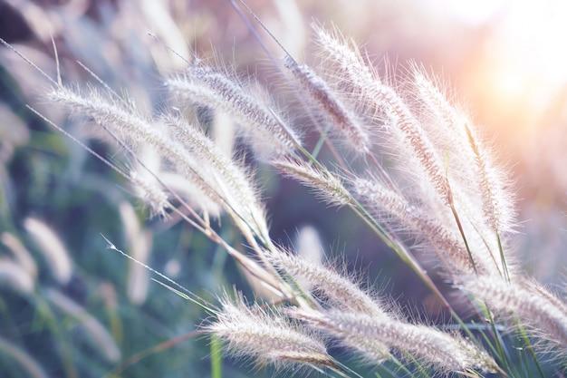 Erba il fiore con il tramonto per il fuoco molle e vago del fondo della natura