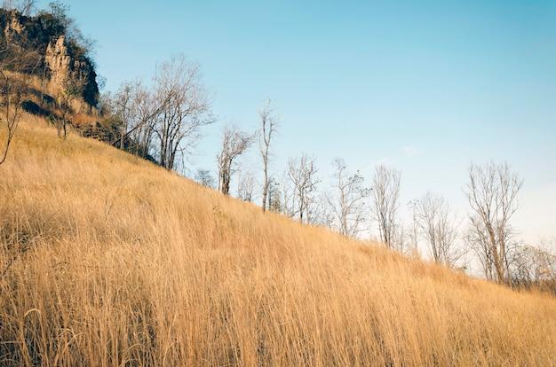 Erba marrone sulle colline con cielo blu