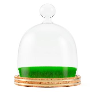 Erba sotto la cupola di vetro sul piatto di legno isolato su fondo bianco
