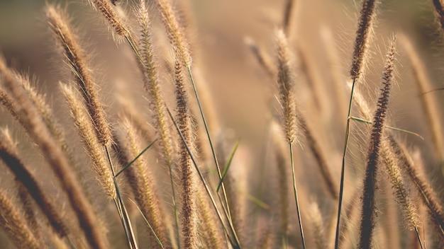 Erba variopinta dei fiori fatta con il gradiente per priorità bassa
