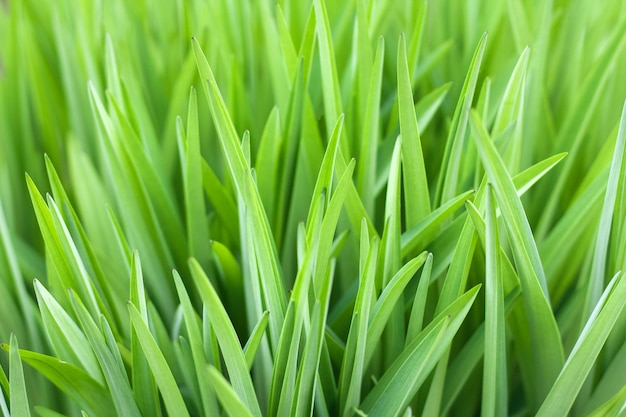 Erba verde bello sfondo naturale