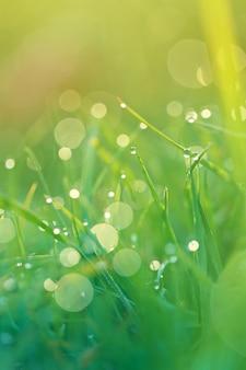Erba verde con gocce d'acqua.