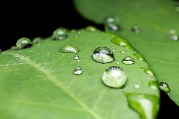 Erba verde con gocce d'acqua