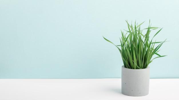 Erba verde della pianta da appartamento in vaso di fiore concreto su una tavola vicino alla parete blu. fotografia elegante, decorazioni per la casa, minimalismo con spazio di copia.