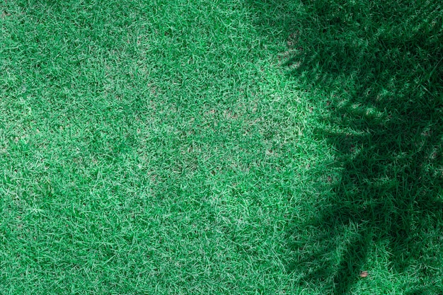 Erba verde e ombra di rami