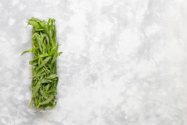 Erba verde fresca del dragoncello in scatola di plastica su calcestruzzo grigio