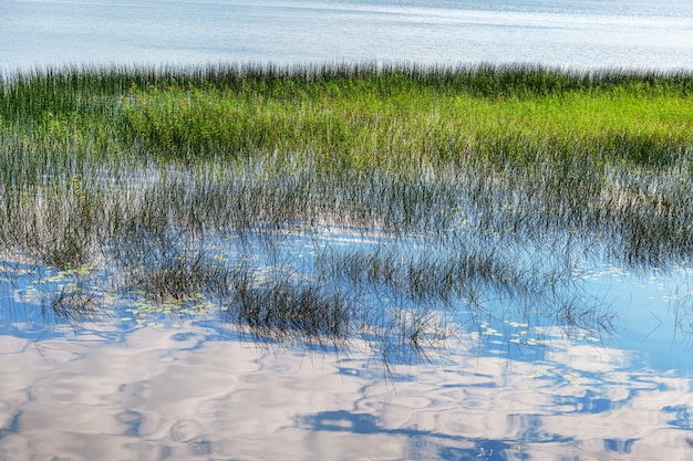 Erba verde in acque calme