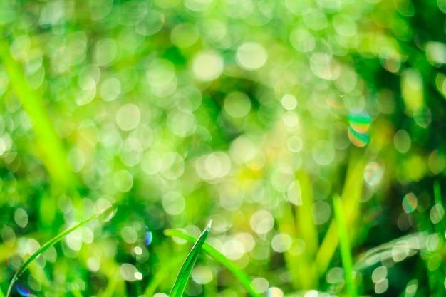 Erba verde in giardino e sfocatura di goccia d'acqua sulle foglie nella stagione delle piogge