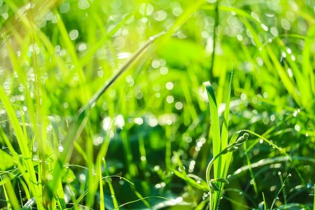 Erba verde in giardino e sfocatura di goccia d'acqua sulle foglie