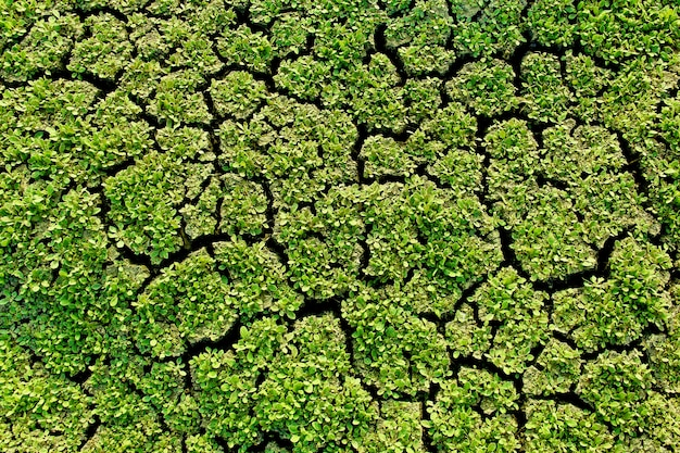 Erba verde secca