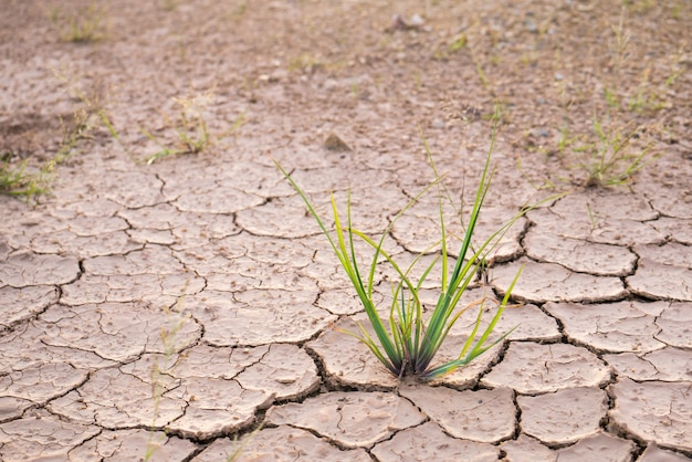 Erba verde su terra screpolata