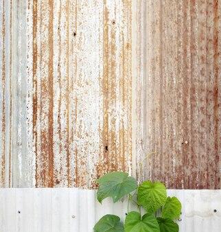 Erbaccia verde sulla vecchia parete galvanizzata arrugginita, vecchia casa abbandonata, colore tonificato.