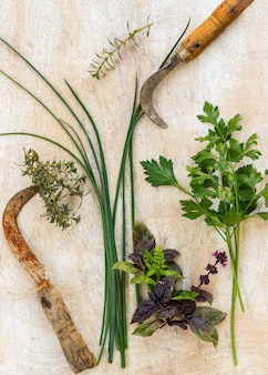 Erbe aromatiche tagliate con trave antica