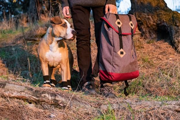 Escursionista e cane in scarpe da trekking stanno fianco a fianco nella foresta. cane in scarpe da trekking e persona di sesso maschile che tiene zaino nella foto nel sole di sera