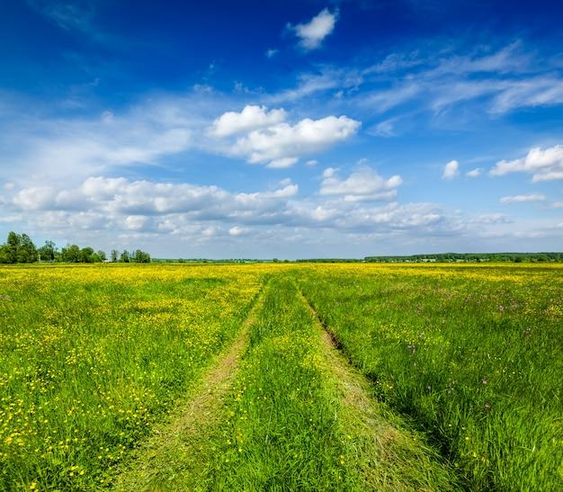 Estate della primavera - strada rurale nel lanscape verde di paesaggio del campo