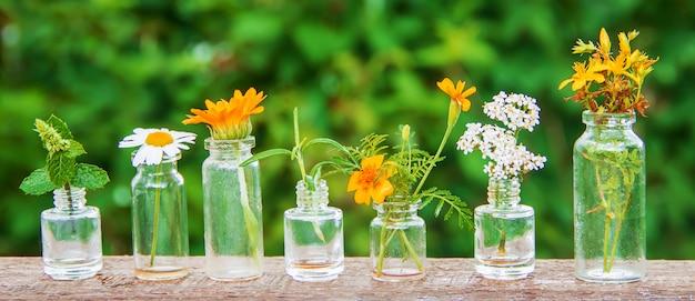 Estratti di erbe in piccole bottiglie. messa a fuoco selettiva