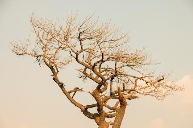 Estratto asciutto del ramo di albero con lo spazio del testo libero