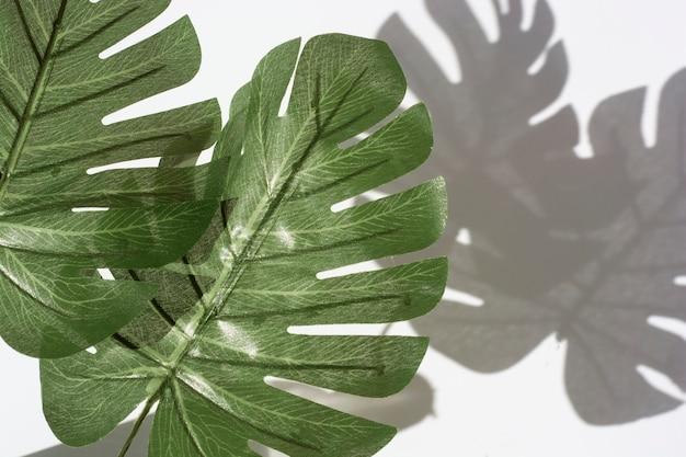 Estratto delle ombre delle foglie di palma sulla parete bianca. copyspace botanica.