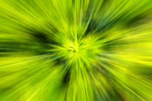 Estratto offuscato dal fondo fresco della pianta verde