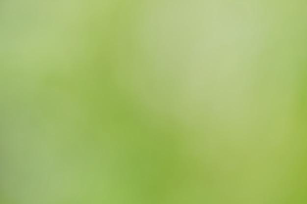 Estratto vago del fondo verde della natura.