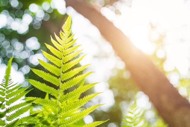 Estratto verde di luce solare della natura della sfuocatura con effetto del chiarore della lente e del bokeh