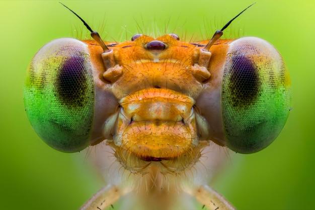 Estremo da vicino dell'occhio libellula
