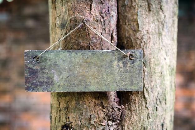 Etichetta di identificazione botanica sull'albero