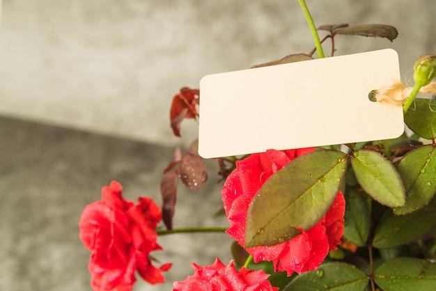 Etichetta vuota sopra il fiore di rosa
