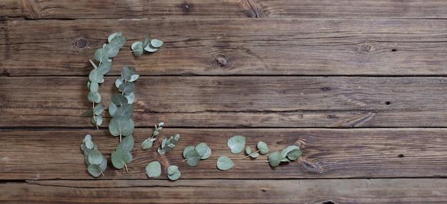 Eucalyptus su vecchio fondo di legno scuro dell'insegna