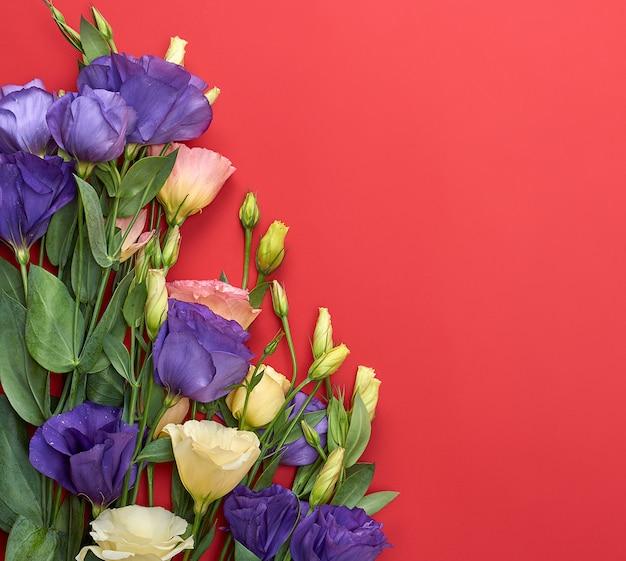 Eustoma lisianthus di fioritura fresco dei fiori su fondo di carta rosso