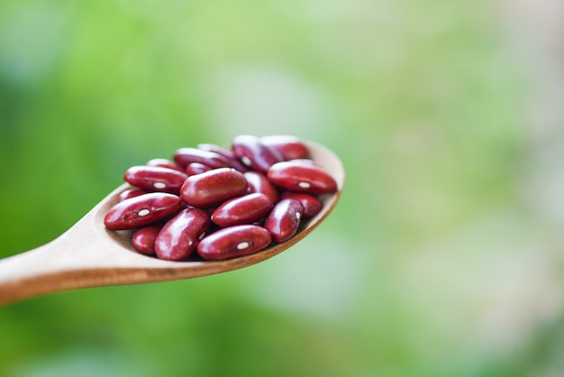 Fagiolo rosso in cucchiaio di legno sul fondo della natura - fagioli rossi dei grani