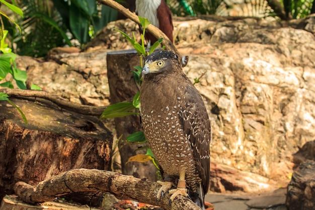 Falco dalla coda rossa su un ramo di un albero.