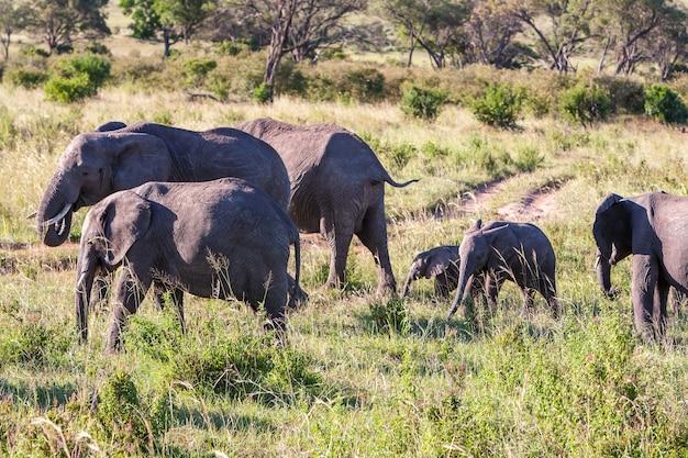 Famiglia di elefanti che cammina nella savana