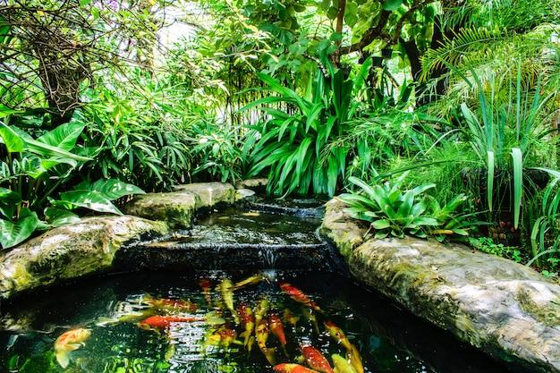 Fancy carp o koi pesce nuotare nello stagno. acquatico con giardino ornamentale.