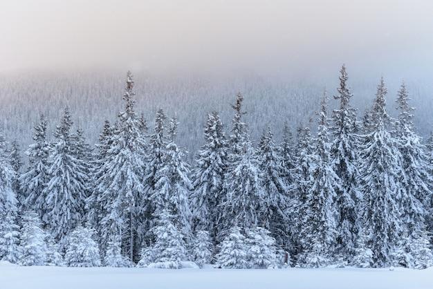 Fantastico paesaggio invernale. alla vigilia della vacanza. la scena drammatica. carpazi, ucraina, europa. felice anno nuovo