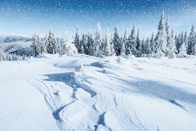 Fantastico paesaggio invernale e albero nella brina. in anticipo