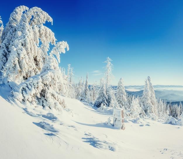 Fantastico paesaggio invernale e albero nella brina.