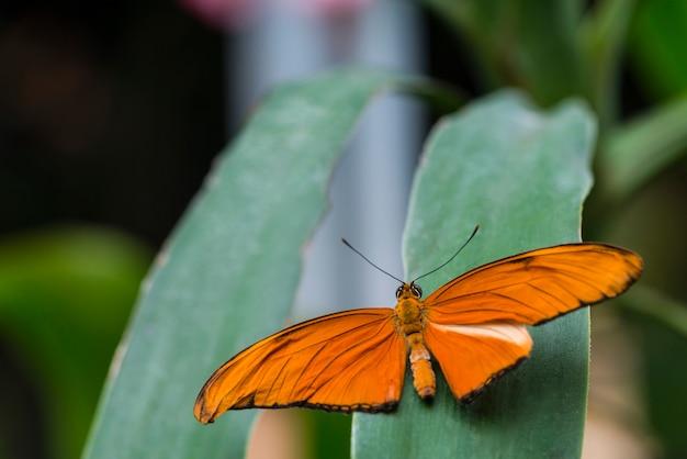Farfalla arancione di vista posteriore sulla foglia