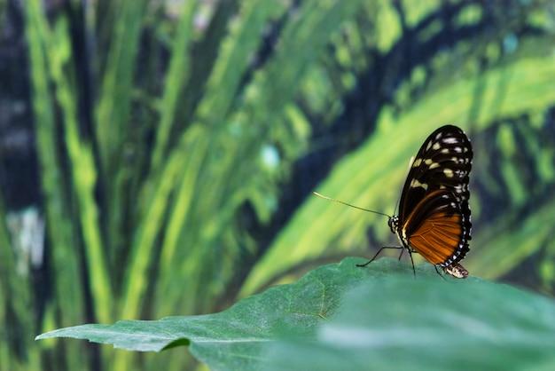 Farfalla bella vista laterale sulla foglia