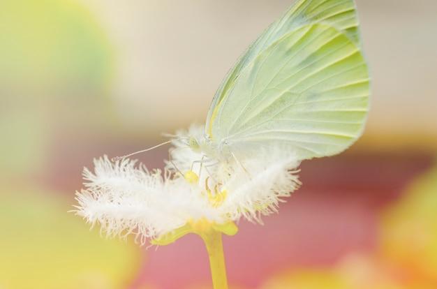 Farfalla bianca con fiori bianchi