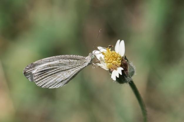 Farfalla bianca con fiori