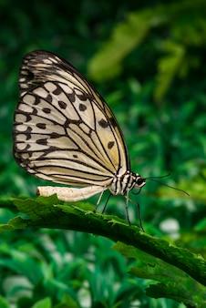 Farfalla che si siede sulla foglia con sfondo di fogliame