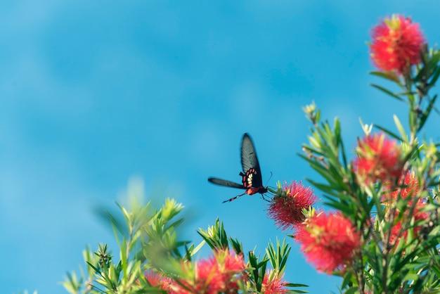 Farfalla che vola intorno al fiore giallo in cielo blu