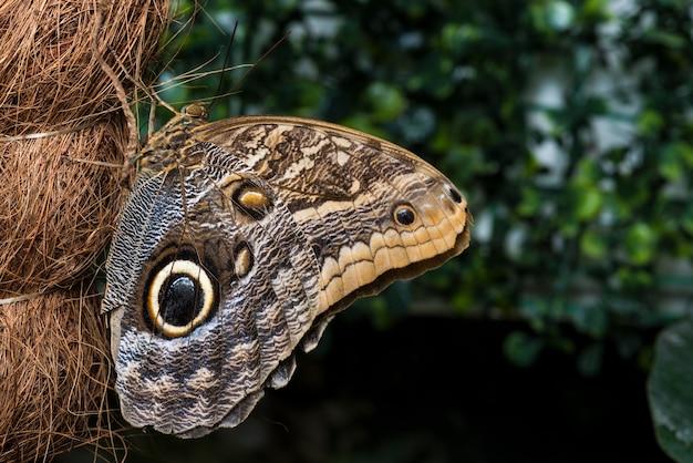 Farfalla del gufo di vista laterale sul tronco della palma