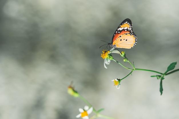 Farfalla del primo piano sul fiore della natura con lo spazio della copia
