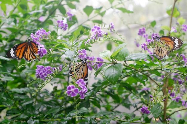 Farfalla del primo piano sul fiore in giardino