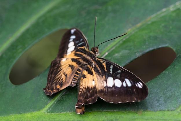 Farfalla dettagliata in habitat naturale