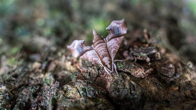 Farfalla falena su foglie secche