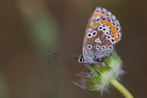 Farfalla fotografata nel loro ambiente naturale.